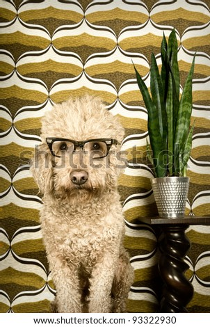 Dog in a retro setting