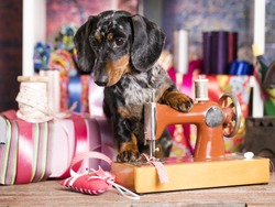dog in a tie and sewing machine, tailor for dogs Fashion designer