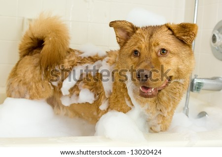 Dog in bathtub with lots of bubbles in it