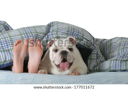 dog in bed child's feed laying under the covers with happy english bulldog beside her isolated on white background