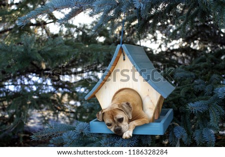 dog in birdhouse