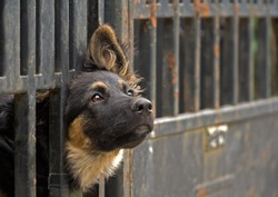 dog in captivity