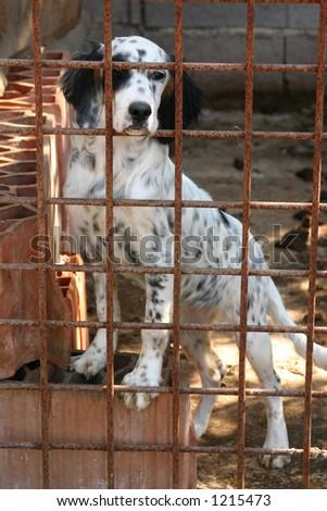 dog in captivity