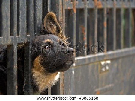 dog in captivity - stock photo