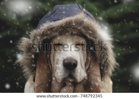 Dog in cold snow