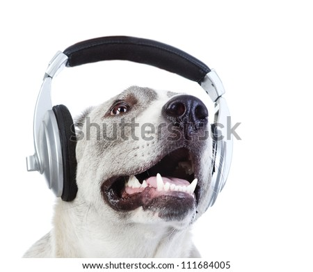 dog in earphones. isolated on white background