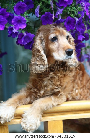 Dog in flowers.