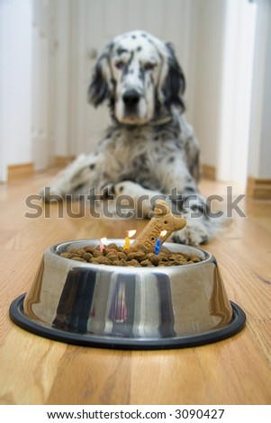 """Dog in front of his """"Birthday cake"""" with candles almost burnt out"""