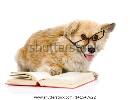 dog in glasses read book. looking at camera. isolated on white background