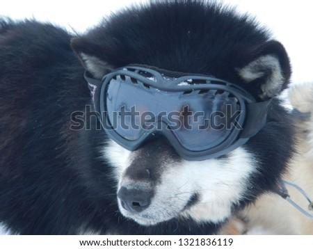 36f33b1ec74 Shutterstock - PuzzlePix