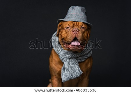 Dog in hat and scarf #406833538