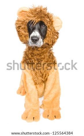 Dog in lion's clothes