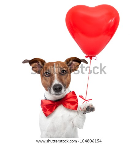 dog in love with a red heart  balloon