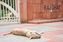 Dog in rajghat,