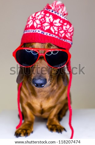 Dog in red holiday hat and glasses