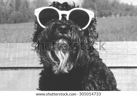 Dog in sunglasses black and white