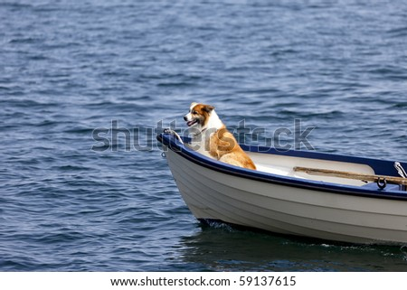 Dog in the front of a small boat
