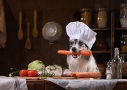 dog in the kitchen with vegetables. Nutrition for animals, natural food. Border Collie in Cooking Hat