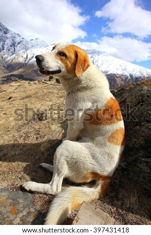 Dog in the mountains  #397431418