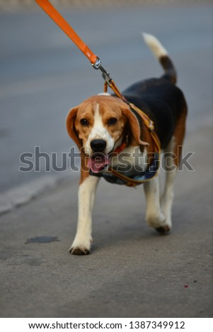 Dog in the running race. #1387349912
