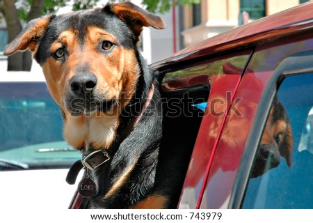 Dog in the window of a truck