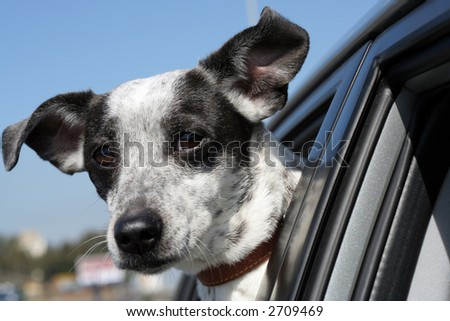 dog in window car 3