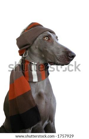 dog in winter look 2