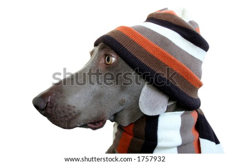 dog in winter look 4