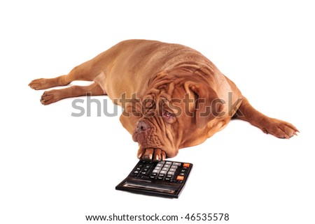 Dog is full of thoughts of its accounting