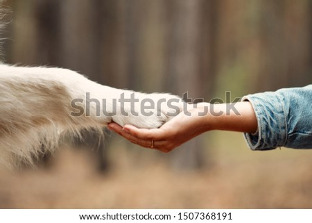 Dog is giving paw to the woman. Dog's paw in human's hand. Domestic pet. Сток-фото ©