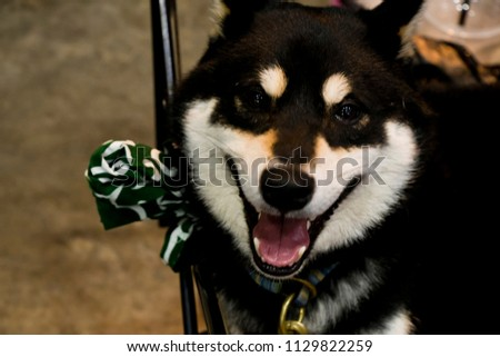 dog is in a naughty moment. - Shutterstock ID 1129822259
