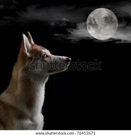 Dog is looking on the full moon at the night sky