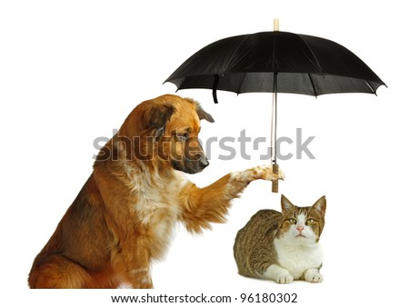 Dog is protecting a cat with a umbrella