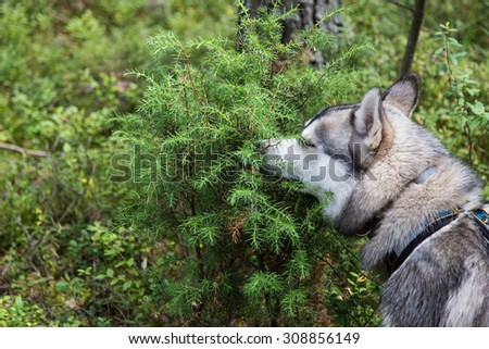 Dog is sniffing a bush