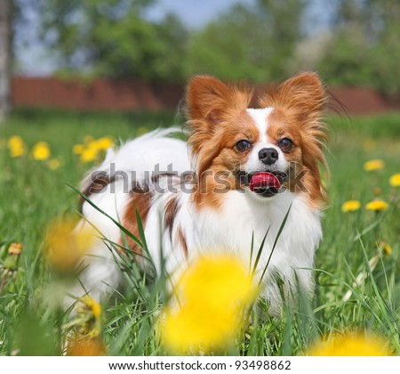 Dog is standing among the yellow flowers