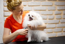 dog is trimmed claws in the pet salon using scissors, in beauty salon for animals.