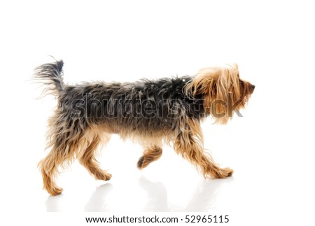 Dog. Isolated over white.