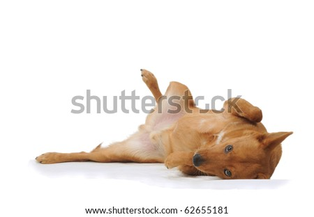 Dog isolated submissive in studio