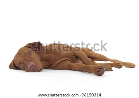 dog laying down on its side on white background