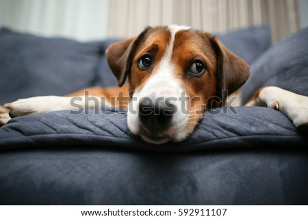 Dog laying down on the couch #592911107