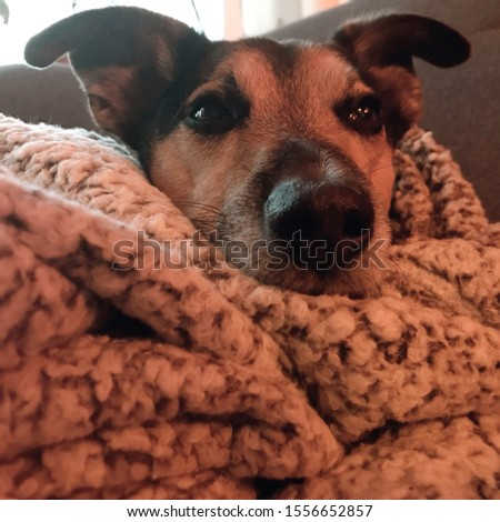 Dog laying on a fluffy blanket