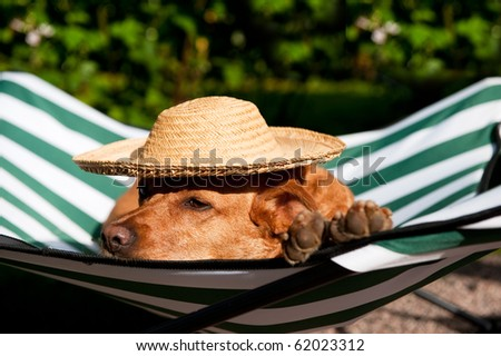 Dog lazy on it's own vacation bed with funny hat
