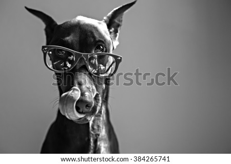 dog licking lips while wearing...