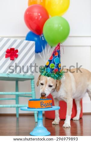Dog licks birthday cake at pet party