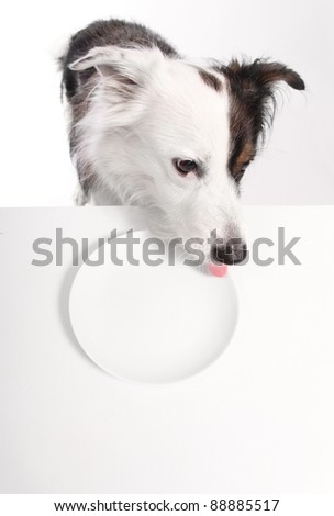 dog licks his empty plate