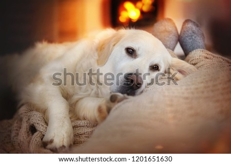 Dog lies in the living room in front of the fireplace with fire