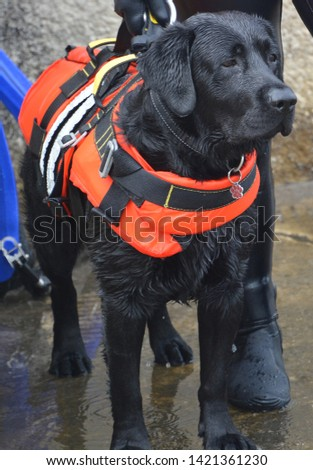 Dog lifeguard who work with the Italian Coast Guard, and are believed to save about 3,000 people every year.There are currently 300 canine lifeguards working on Italian beaches #1421361230