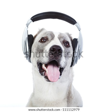 dog listening to music on headphones. isolated on white background