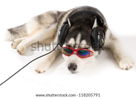 Dog listening to music with glasses on white background