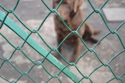 dog locked behind a fence